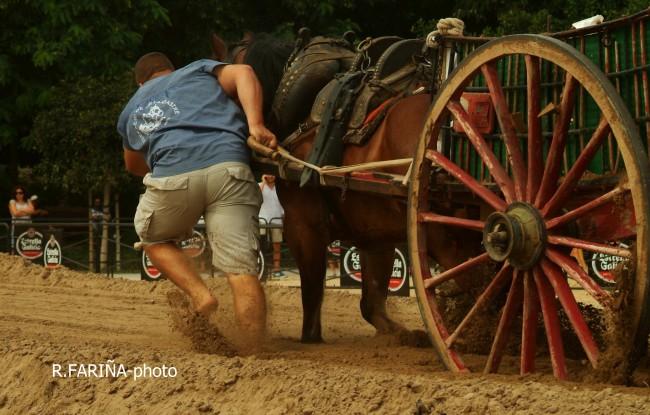 Primeras jornadas del XI Concurso de Tiro y Arrastre Ciudad de Valencia (16)