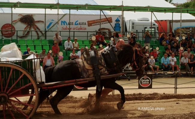 Primeras jornadas del XI Concurso de Tiro y Arrastre Ciudad de Valencia (20)