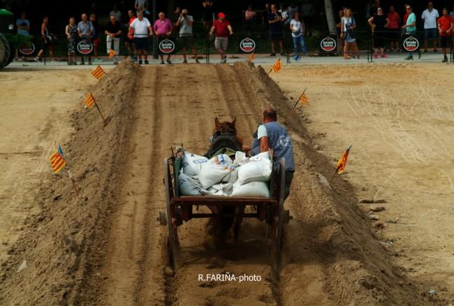 Primeras jornadas del XI Concurso de Tiro y Arrastre Ciudad de Valencia (5)