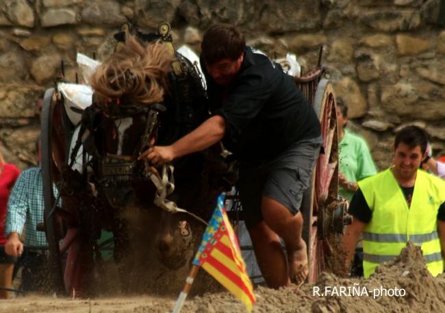 Primeras jornadas del XI Concurso de Tiro y Arrastre Ciudad de Valencia (9)